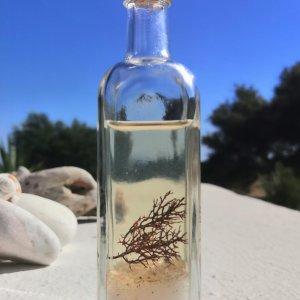 Elixir des sirènes - Force de l'océan - Elixirs de Sagesse
